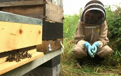 Aoibhinn and Bees