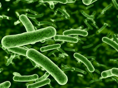 Designer probiotic bacteria have the potential to alter brain fatty